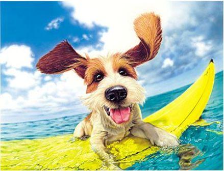 Quais cuidados preciso ter com meu pet no verão?